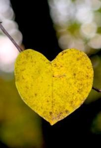 Redbud leaf in fall