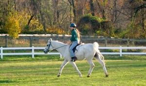 """Ann E. Michael """"No White Horses"""""""