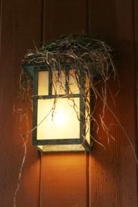 Dwelling: a light-house