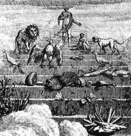 The chain of being, from Charles Bonnet, Œuvres d'histoire naturelle et de philosophie, 1779-83