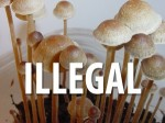 http://michaelmhughes.com/teonanacatl-the-secret-history-of-magic-mushrooms-video-links-and-more/