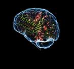 braintrust-small