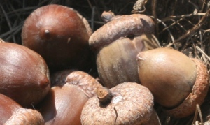smallcorns