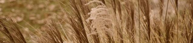 cropped-grassesa.jpg