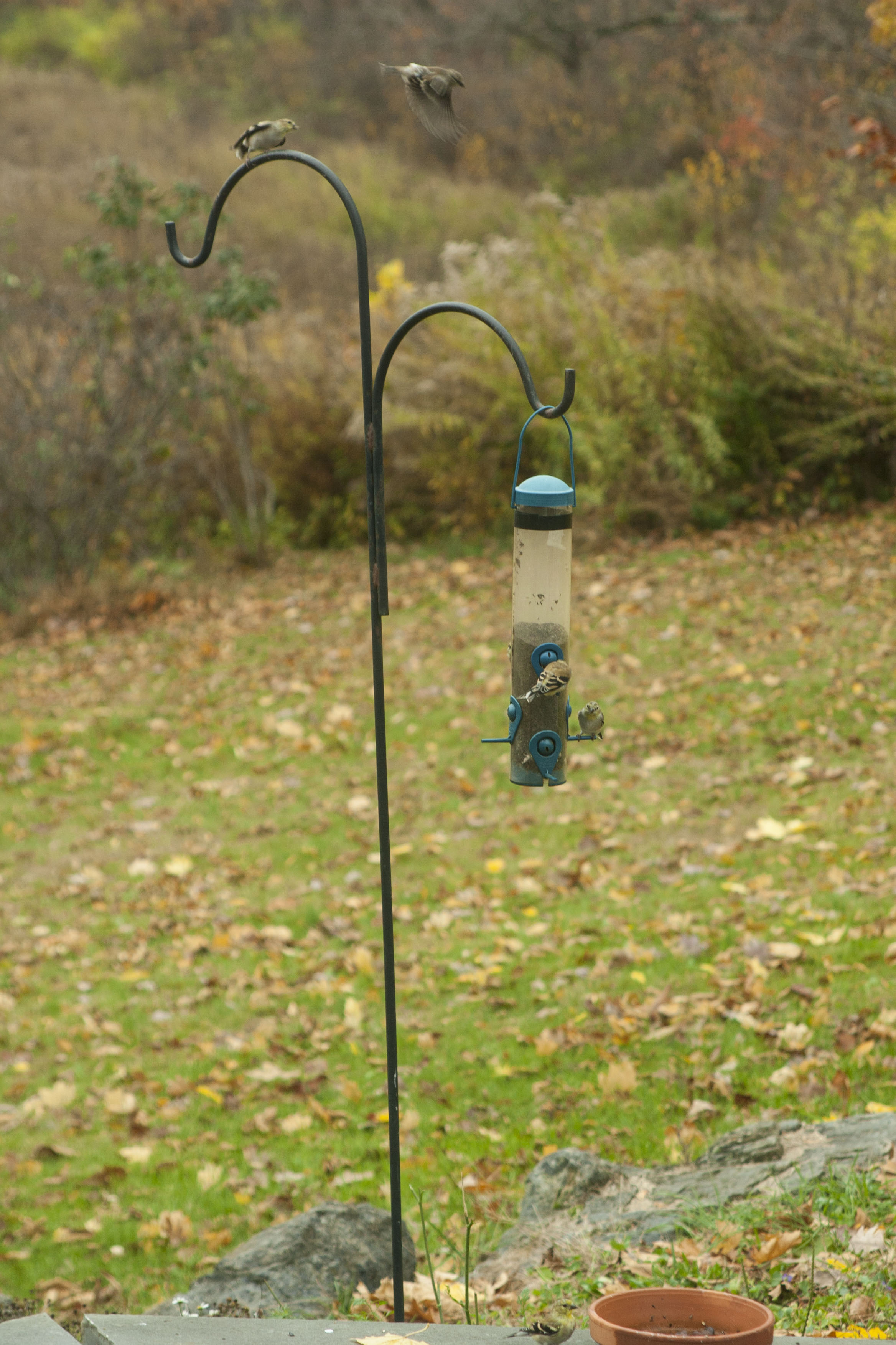 finches-fall1