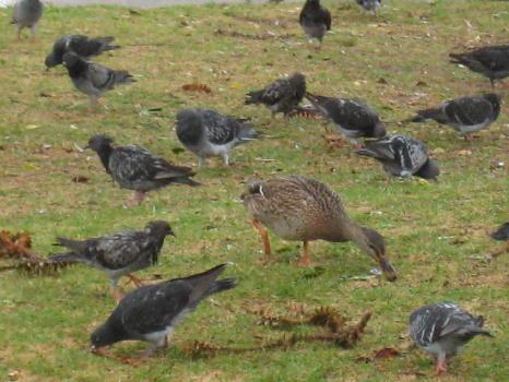 http://asymptotia.com/wp-images/2009/10/odd_duck.jpg