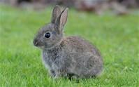 rabbit-014