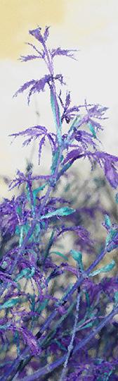 bkmk-violet