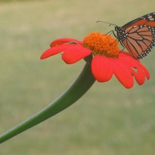 monarch.ann e michael