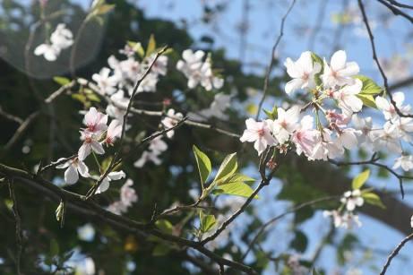 springblooms