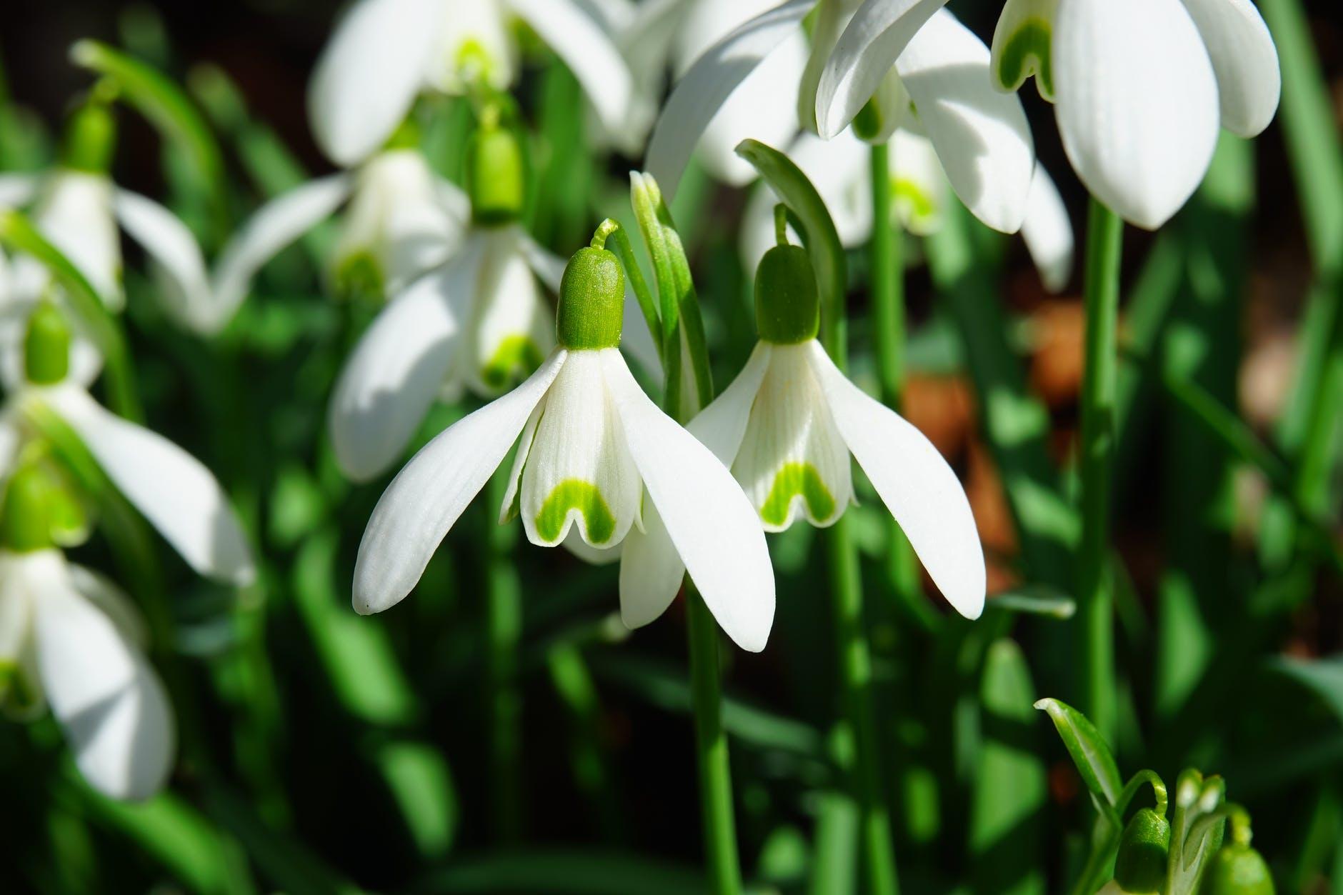 flowers plant spring macro