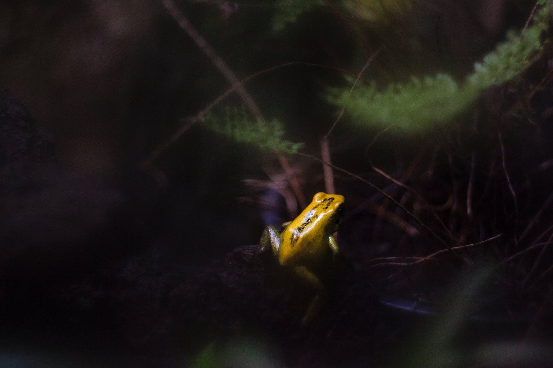 amphibian animal animal photography blur