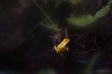 amphibian animal animal photography blur