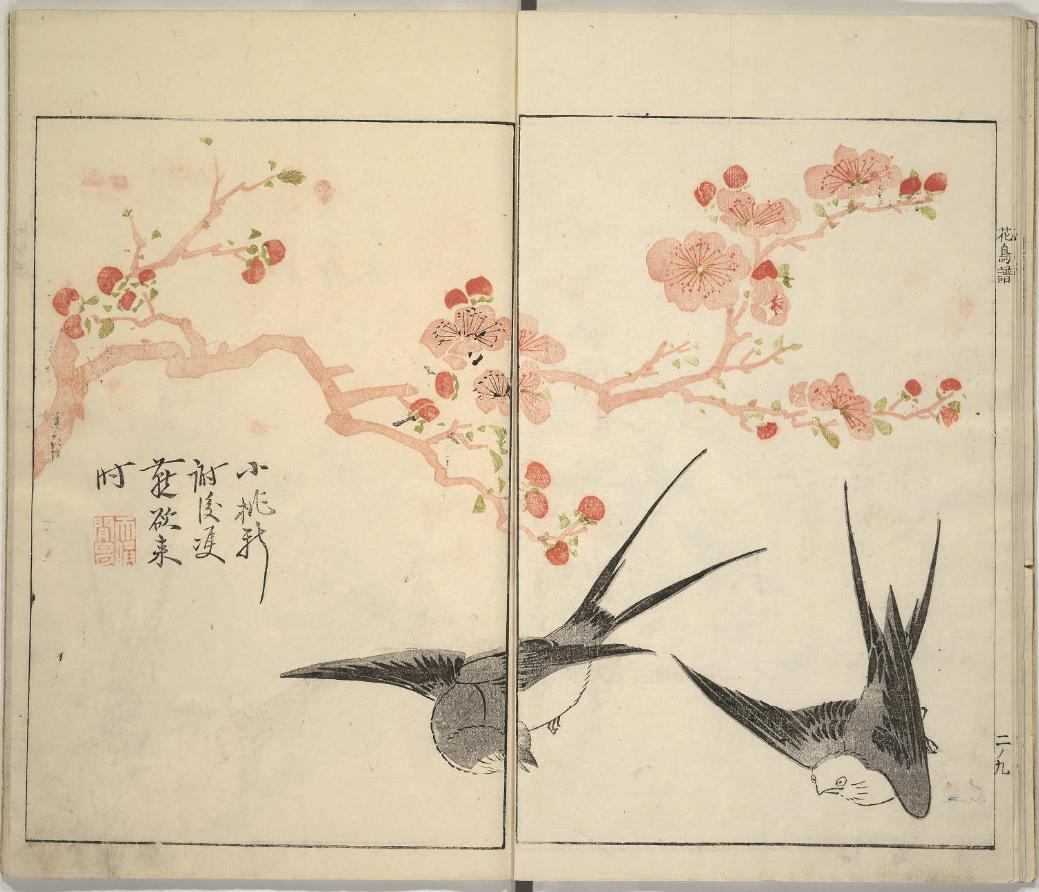 color birds-blooms1
